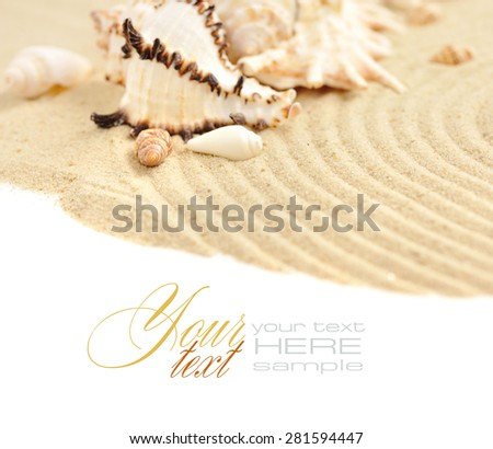 Sea shells in the sand on a white background - stock photo