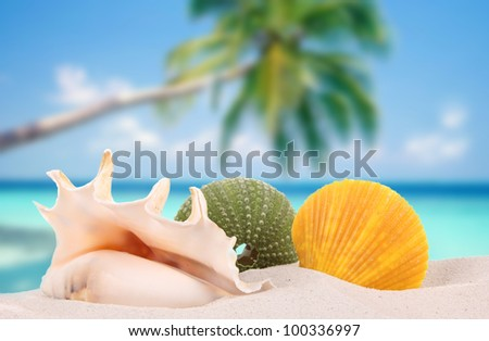 Sea shells on a beach - stock photo
