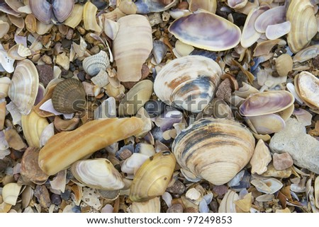 Sea shells on a beach at Ireland's Western coast - stock photo
