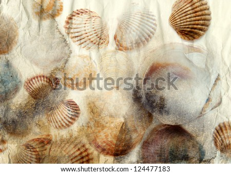 Sea shells on old paper background - stock photo