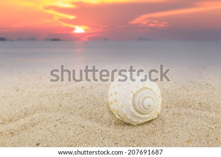 Sea shells on sand beach with sunset background beach collection  - stock photo