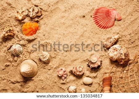 sea shells on the beach - stock photo