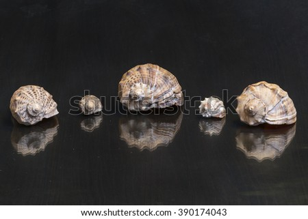 Sea shells on the mirror wooden table in chequerwise - stock photo