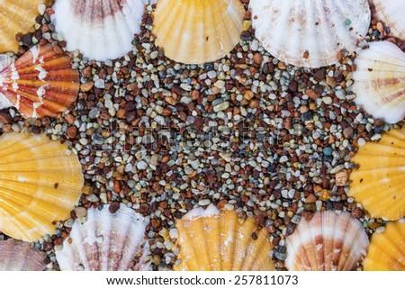 sea shells on the pebbles - stock photo