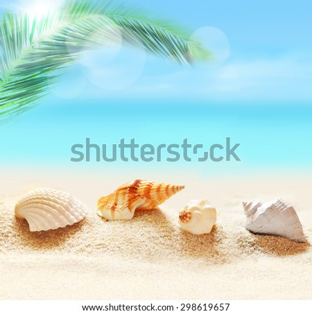 Sea shells on the sand background. Summer beach and palm. - stock photo