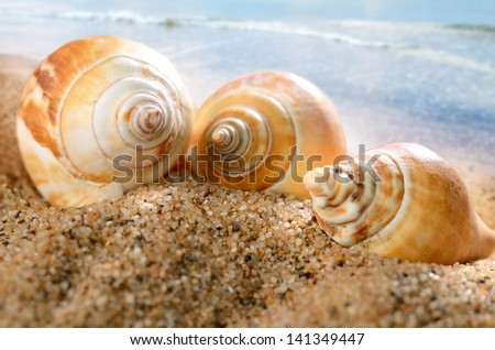 sea shells on the sandy beach - stock photo