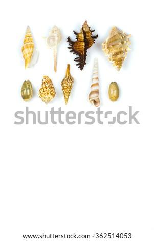 Sea shells on white background - stock photo