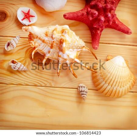sea shells on wooden board - stock photo