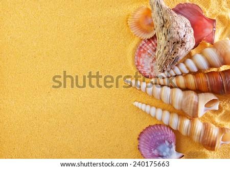 sea shells on yellow sand - stock photo