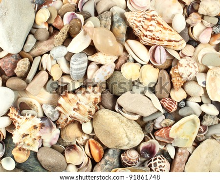 sea shells stones background - stock photo