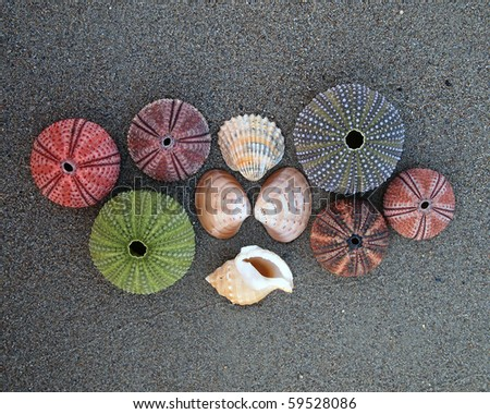 Sea shells, urchins and clams on wet sand - stock photo