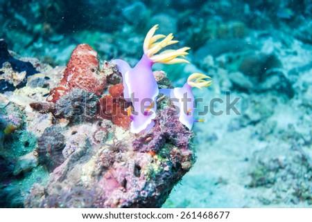sea slug - stock photo
