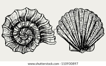 Sea Snail Drawing Sea Snail And Scallop Shell