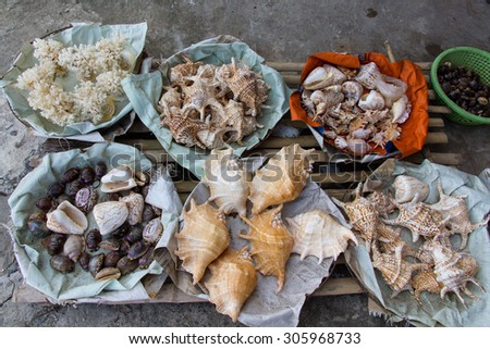 sea snails for sales - stock photo