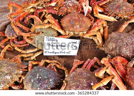 Sea spider crab for sale at a French farmers market - stock photo