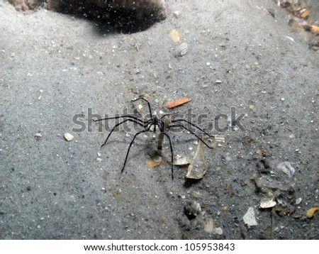 Sea spider underwater - stock photo