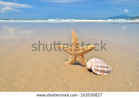 Sea star and conch shell on the sandy beach - stock photo