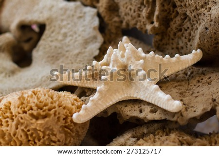 Sea star and sponges - stock photo