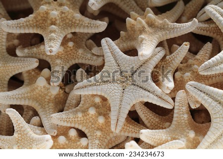 sea star background - stock photo
