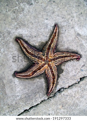 sea star on the road - stock photo