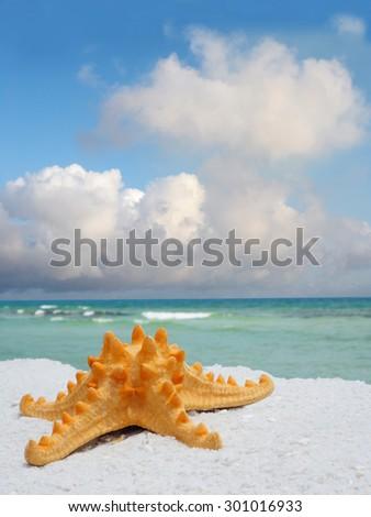 Sea Star on White Sand Florida Beach - stock photo