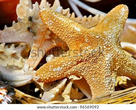 Sea stars - stock photo
