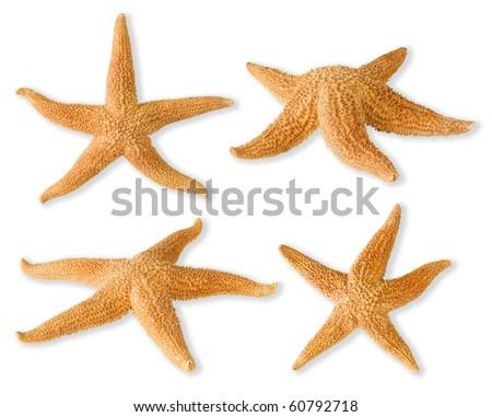 Sea-stars isolated on white - stock photo