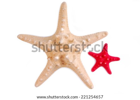 sea stars isolated on white background - stock photo