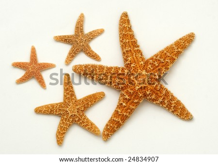 Sea stars on white background - stock photo
