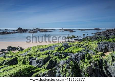 Sea stones covered with green algae. Seaview. - stock photo