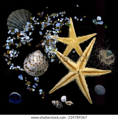 Sea theme composition made from seashells, sand and starfish - stock photo