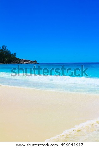 Sea Tranquility Palms  - stock photo