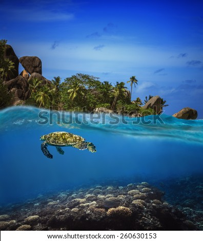 Sea turtle is swimming under water around a tropical island (split) - stock photo