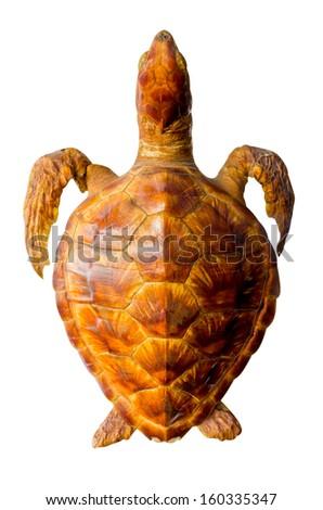 sea turtle on white background - stock photo