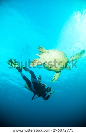 sea turtle scuba diver diving together bunaken sulawesi indonesia - stock photo