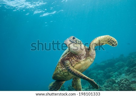 Sea Turtle Swimming with lots of blue ocean - stock photo