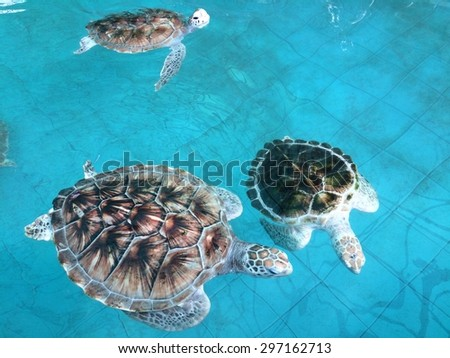 Sea turtle / Turtle swimming in pond - stock photo