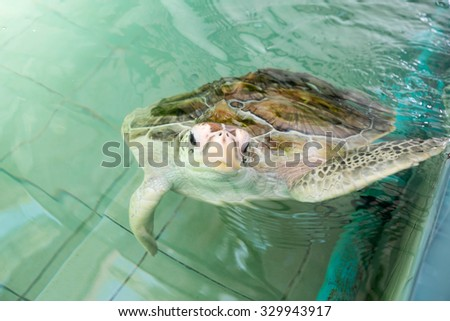 Sea turtles in the pond rehabilitation - stock photo