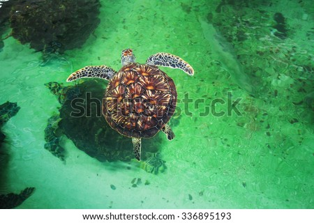 Sea turtles in the pool in the National Oceanographic Museum of Vietnam. Nha Trang - stock photo