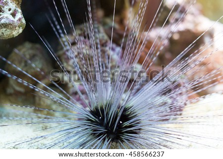 Sea urchin in the depths of the sea. - stock photo