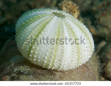Sea Urchin Test(skeleton) sitting on an growth encrusted bottle on the sea floor. Picture taken Palm Beach County Florida. - stock photo