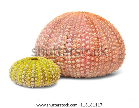 Sea urchins shell, close up with shallow DOF. - stock photo