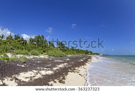 Sea weeds problem in the caribbean - stock photo