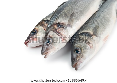 Seabass (Dicentrarchus labrax) on white background - stock photo