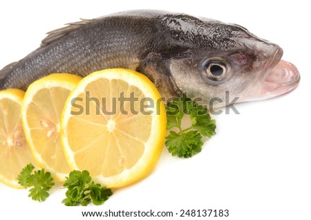 Seabass on a white background - stock photo