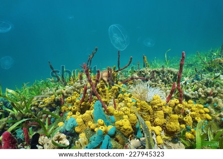 Seabed with colorful sea creatures and jellyfish in background, Caribbean sea - stock photo