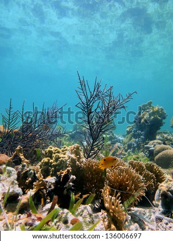 Seabed with coral reef reflected under water surface of the Caribbean sea, Mayan Riviera, Mexico - stock photo
