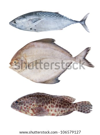 Seafish collection isolated on white - stock photo