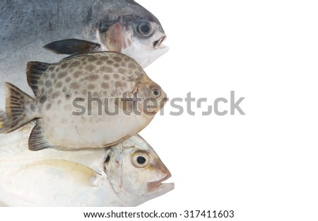 Seafood background, fresh sea fish isolated on white with room for text - stock photo