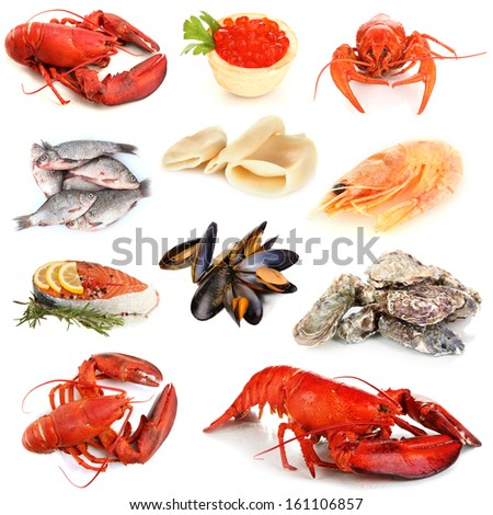Seafood isolated on white - stock photo